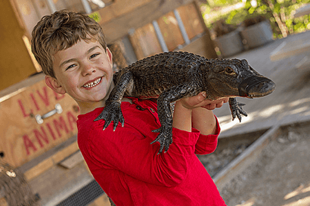 Gator and Wildlife Park