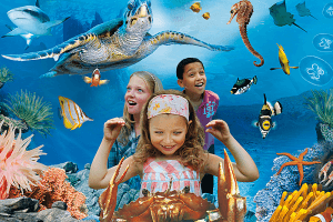 have a fun day with Sea Life Aquarium