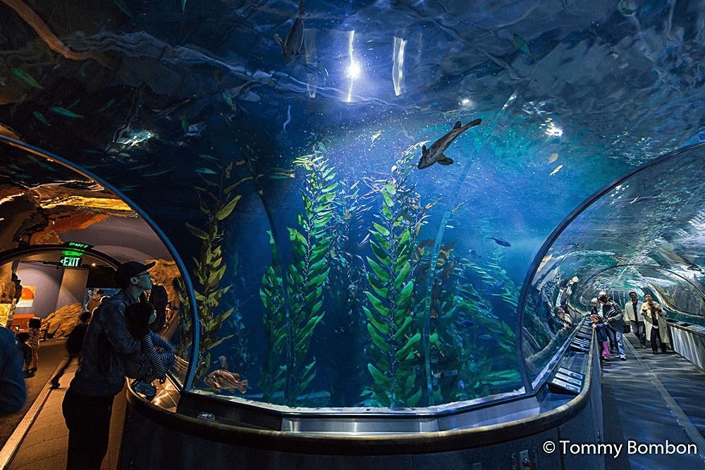 photograph relating to Monterey Bay Aquarium Printable Coupon identify Aquarium of the Bay Lower price Tickets 25% off with Smartsave
