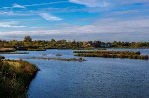 Wetland Centre