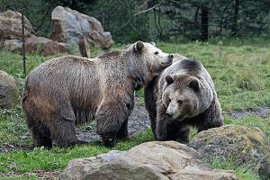 San Francisco Zoo Gardens