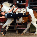 discount to Suhl's Rodeo show horse