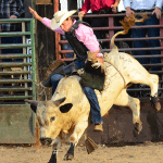 discount to Suhl's Rodeo riding bull