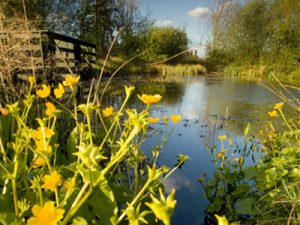 fun easter activity at london wetland centre