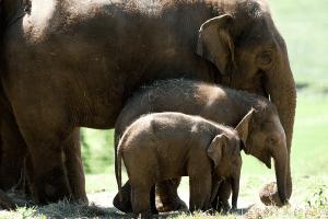 Whipsnade Zoo Discount Elephants